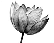 meditation_intro